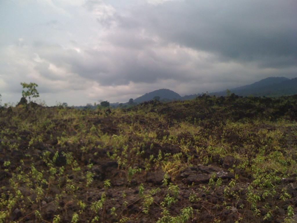 Limbé - collines verdoyantes - champs de lave - mont Cameroun